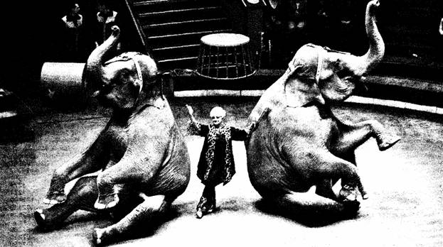 Танец со слонами заслуженной артистки России Нины КОРНИЛОВОЙ