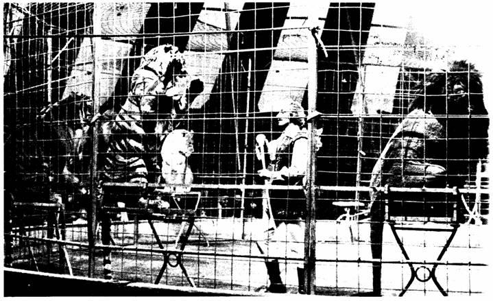 Дрессировщик в клетке с тиграми