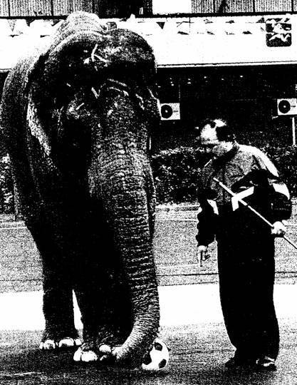 Мы с моей любимой слонихой Рани — одно целое.