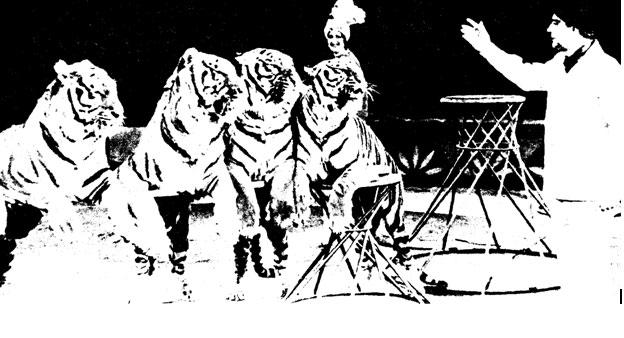 Виктор Тихонов на манеже с тиграми