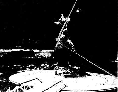 Фрагмент номера с сивучами дрессировщика Василия Тимченко.