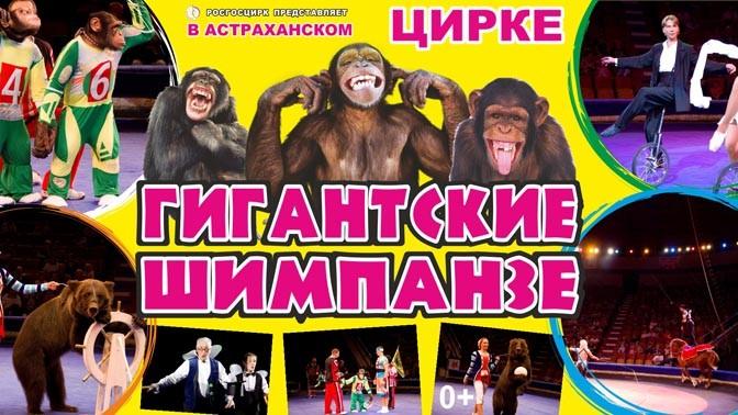 Программа в Астраханском цирке