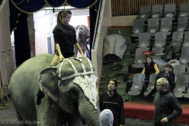 В Волгоградском цирке прошла «Открытая репетиция» шоу  «Индийские слоны» Андрея Дементьева-Корнилова