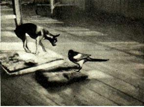 Сорока и собака