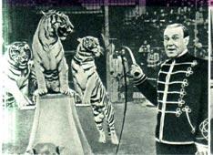 Б. А. Эдер с тиграми