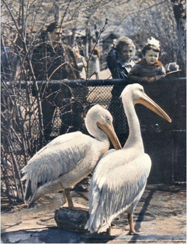 Обложка журнала Советский цирк. Июнь 1963 г.