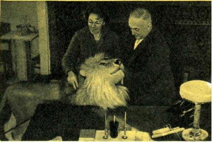 И. Н. Бугримова, Г. Алиев и лев