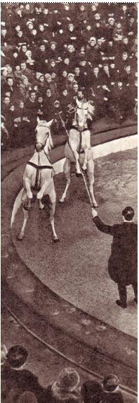 Б. МАНЖЕЛЛИ,  дрессировщик лошадей