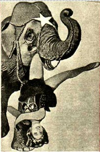 В пасти у слона