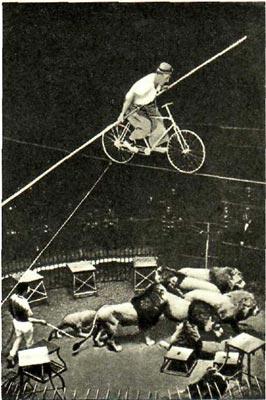 Гвоздь программы Мюнхенского цирка: опасная езда  на велосипеде над клеткой со львами   без  предохранительной сетки.
