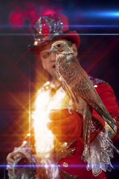 В Ростовском цирке «Шоу воды, огня и света» п/р А. Сокола