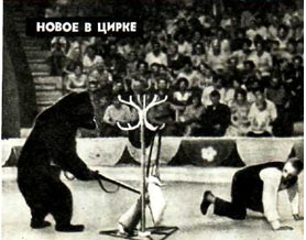 Артист цика Василий Калинин на арене цирка с смедведем