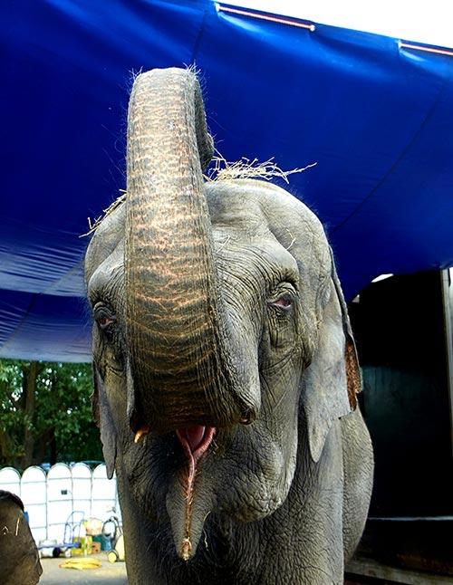 «Терапия со слонами» династии Корниловых в День защиты слонов в зоопарках