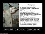 137015_kupajte_kote_pravelno.jpg