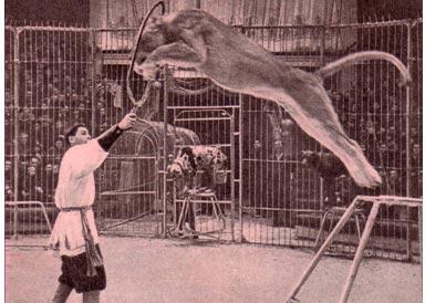 И. Рубан выступает на манеже Московского цирка (1953 г)