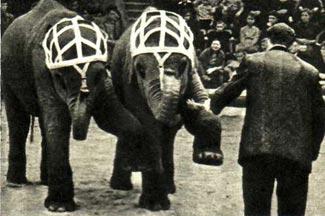 Дрессировщик Вернер Хедрих со слонами