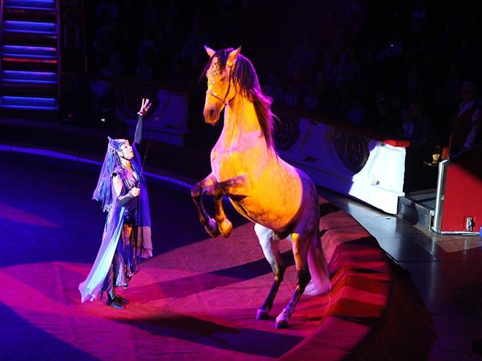Номер «Эльфория» в исполнении знаменитой дрессировщицы лошадей Анастасии Стыкан-Федотовой.