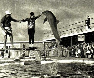 Шоу дельфинов. Такое не часто увидишь