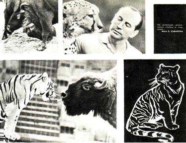 Зубры и тигры Виктора Тихонова