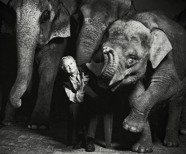 Знаменитая дрессировщица слонов заслуженная артистка России Нина Андреевна Корнилова