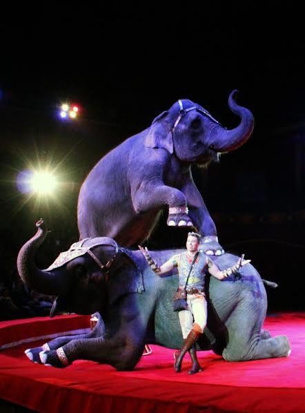 Андрей Дементьев-Корнилов поздравил своих слоних с 8 марта