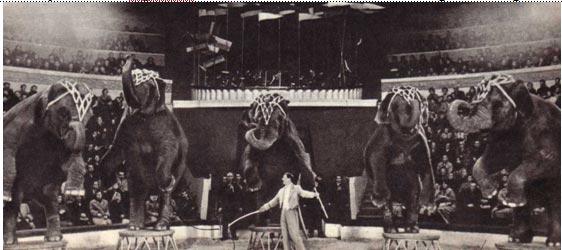 Выступление Цргака  со  слонами — всегда  интересное зрелище
