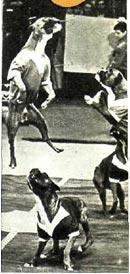 Собаки-футболисты дрессировщика Догси