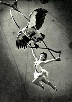 Воздушная гимнастка, заслуженная Армянской ССР Елена Аванесова. Фото С. Мишина