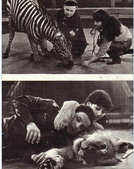 Научить зебру склонить колени — тоже трудно. На представлении зрителям наверняка покажется, что это очень легко и просто...