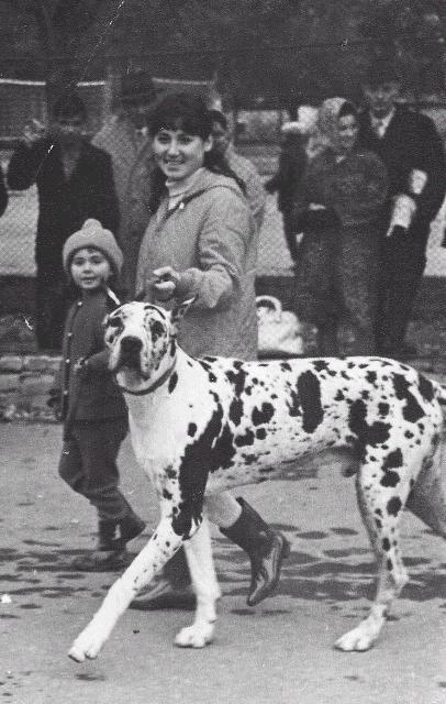 Хищные животные легендарной дрессировщицы заслуженной артистки РСФСР Марицы Запашной остались без средств к существованию.