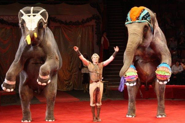 Андрей Корнилов примет участие в концерте в честь  95-летия российского цирка