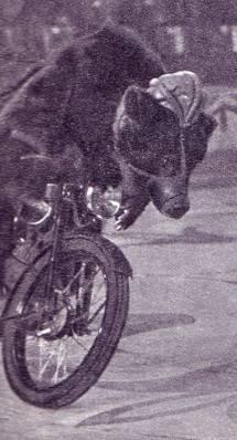 Медведь мотоциклист