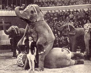 Только что этот огромный слон осторожно перелез через своего партнера и уселся на него