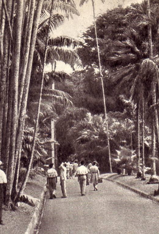 Экскурсия   в   волшебное   царство   индонезийской   природы
