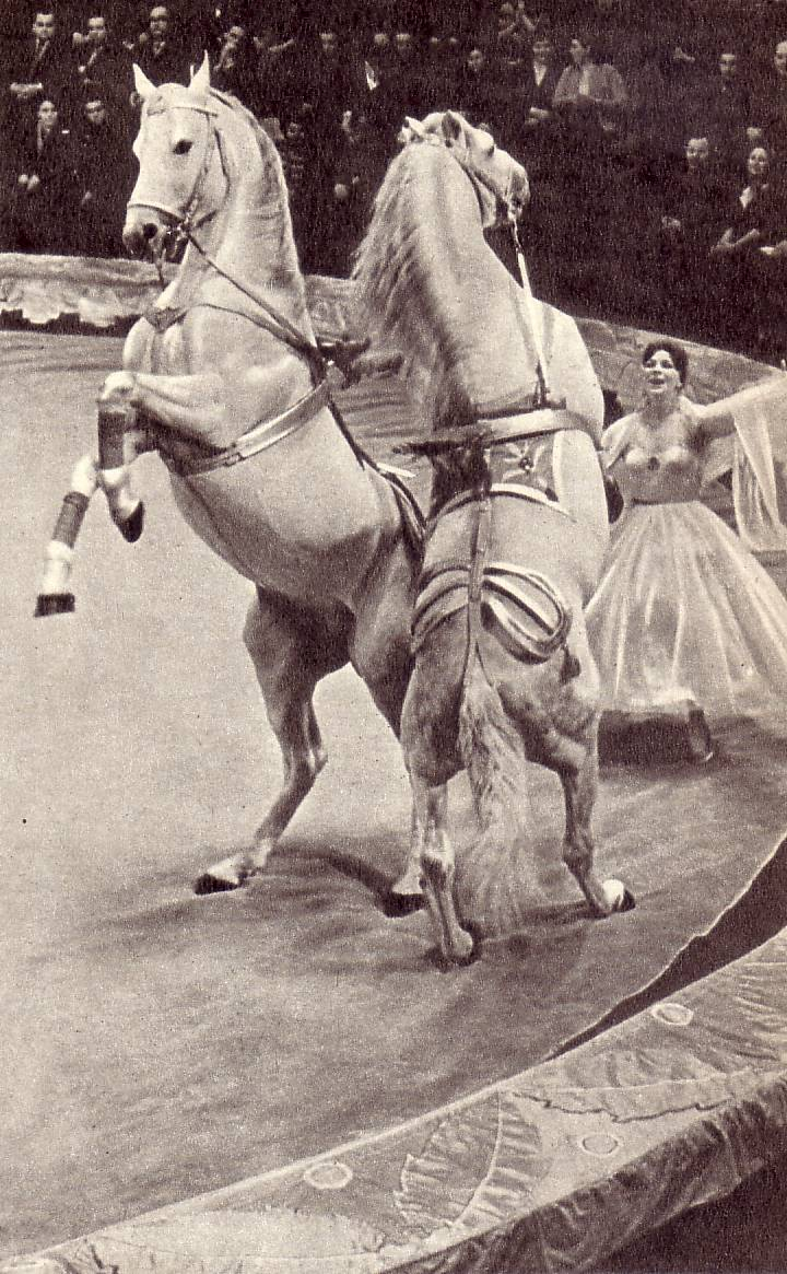 Людмила  КОТОВА вальсирует вместе со  своими  четвероногими «кавалерами»