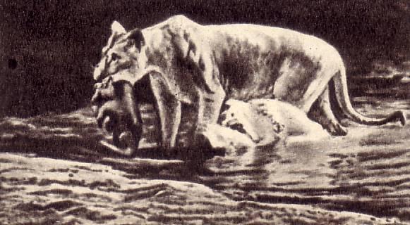 Так она переносила через воду своих львят