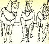 Случай с дрессировщиком верблюдов