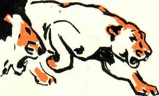 разъяренные львы2