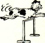 Как дрессировать собачку4