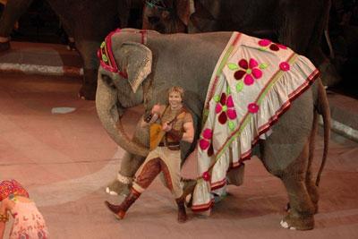 Тайна слонов великанов в Ижевске. Корниловы