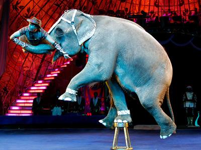 в Сочинском цирке праздничное представление шоу индийских слонов Андрея Дементьева-Корнилова