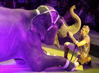 Международный день слонов