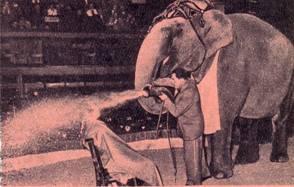 Иштван  Криштоф  со своей  дрессированной слонихой  Аидой