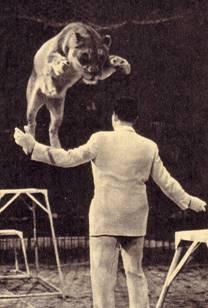 Карой Вагнер – укротитель львов