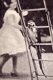 попугаи И. Ольховиковой