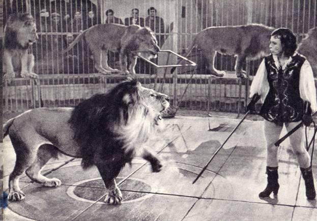 Эпизод из аттракциона львов