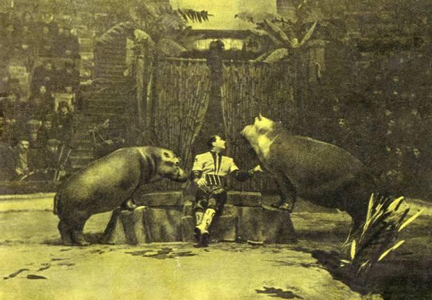 Группа экзотических животных Степана Иссаакяна бегемоты