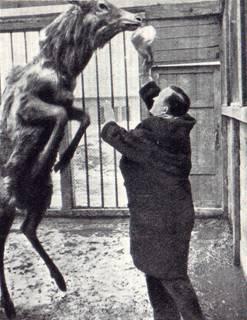 Владимир Дуров в зооцентре. Знакомство с изюбром.