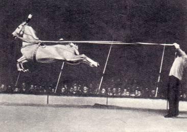 Сомюрская школа лошадь Магомет прыжок лошади в высоту с места