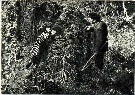 Б. Эдер и тигр Пурш иа съемках фильма «Опасные тропы» в Бакуриани